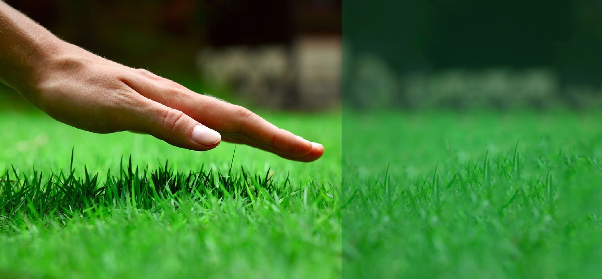 hand almost touching short grass on a lawn