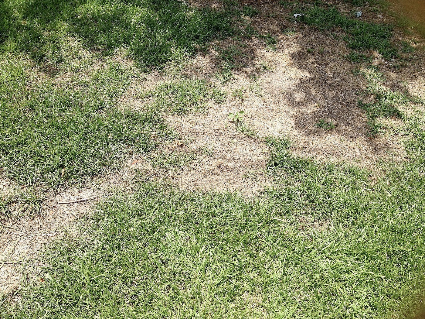 Lawn being treated to optimize growth before summer