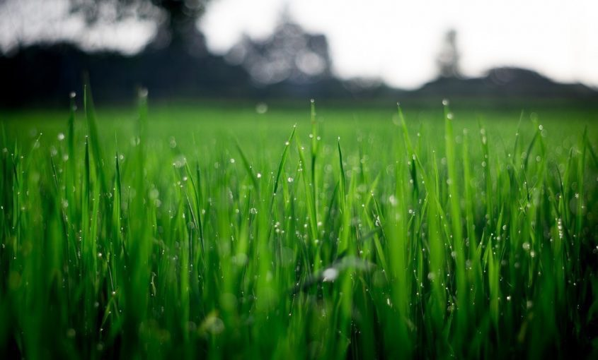 How Much Water Does Your Lawn Really Need?