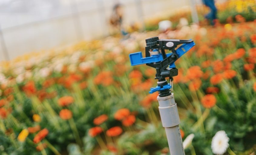 Common Sprinkler Head Issues You May Face This Summer