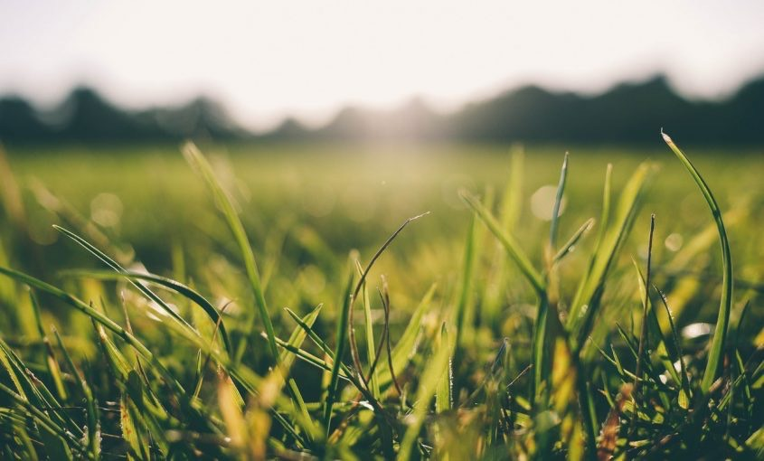 Is Your Grass Suffering from Summer Lawn Stress?