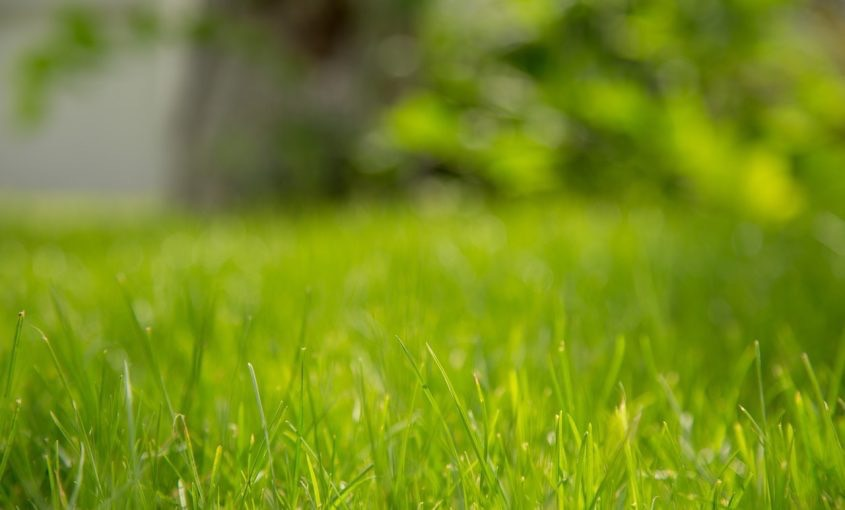 Know Your Weeds: The Life Cycle of Nutsedge