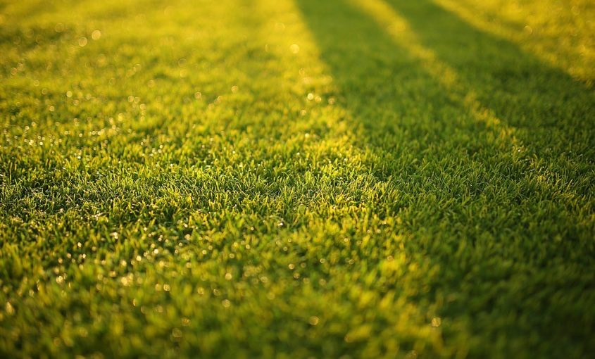Is Your Grass Turning Yellow?