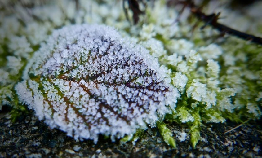 Winter Lawn Practices: Put Your Lawn to Bed This Winter