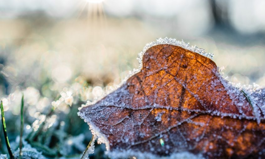 How to Protect Yourself from Lawn Frost