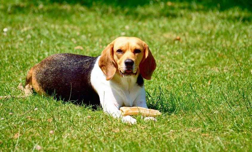 The Dangers of Dog Poop in Your Yard