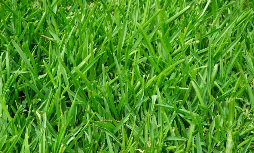 How to Buy Good Quality Grass Seed