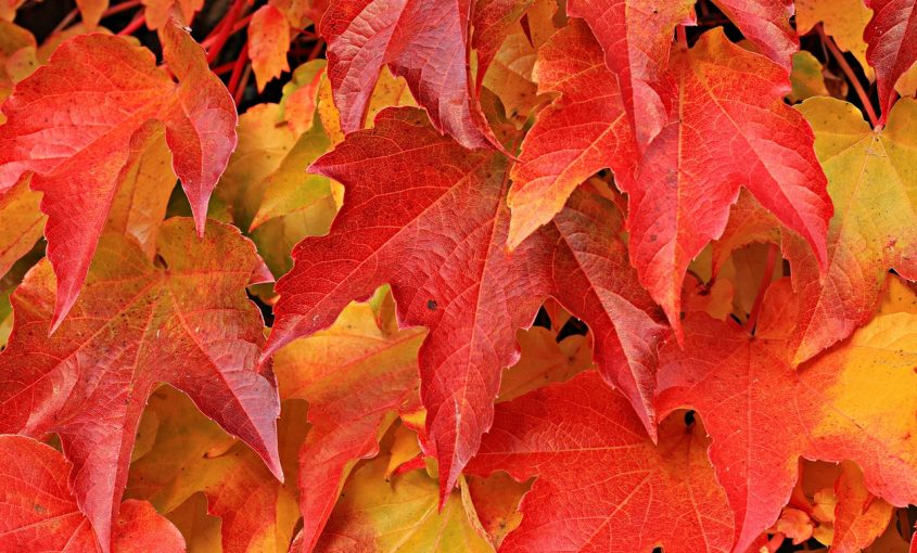 Fun Facts: Fall Leaves
