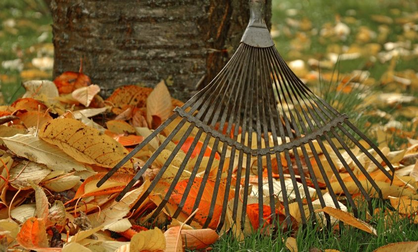 Pest Control During the Fall