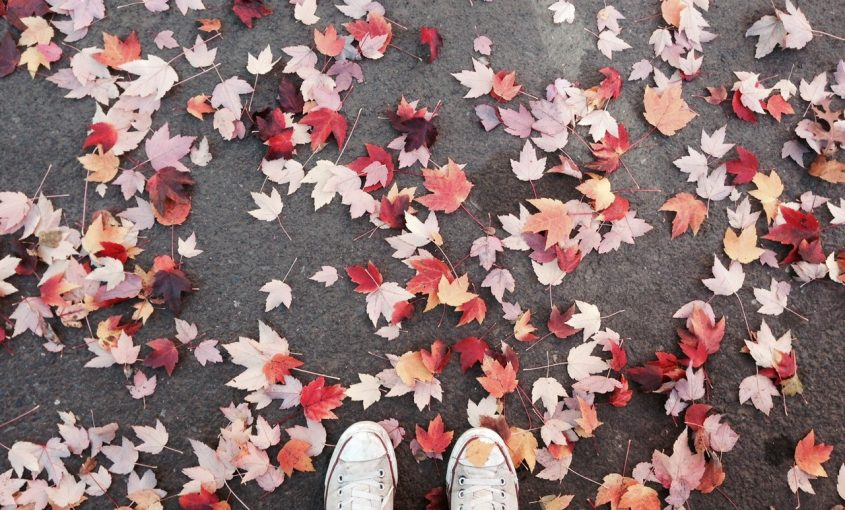 Making the Most Out of Fall Leaves