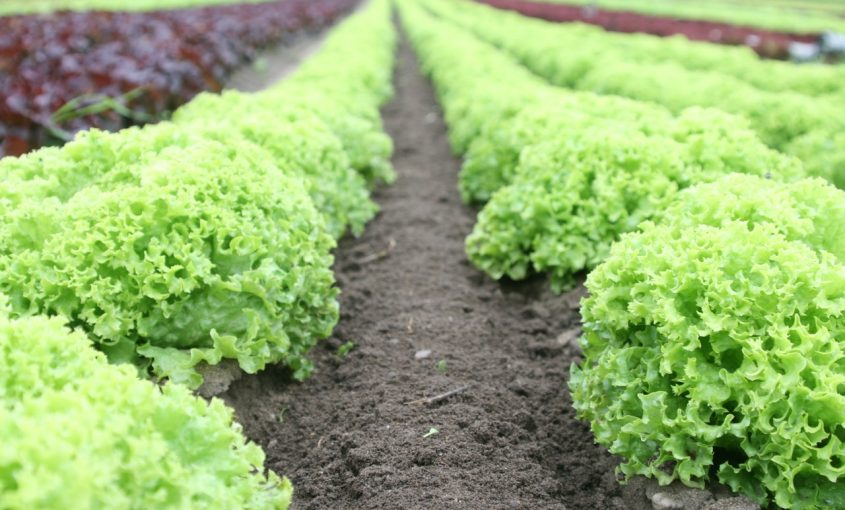 Winterizing Your Vegetable Garden