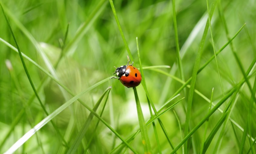 Deciphering Beneficial Insects Vs. Pests